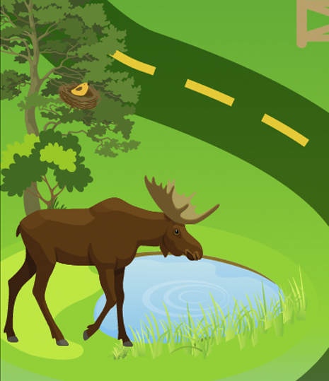 Tips to reduce wildlife conflict on your property