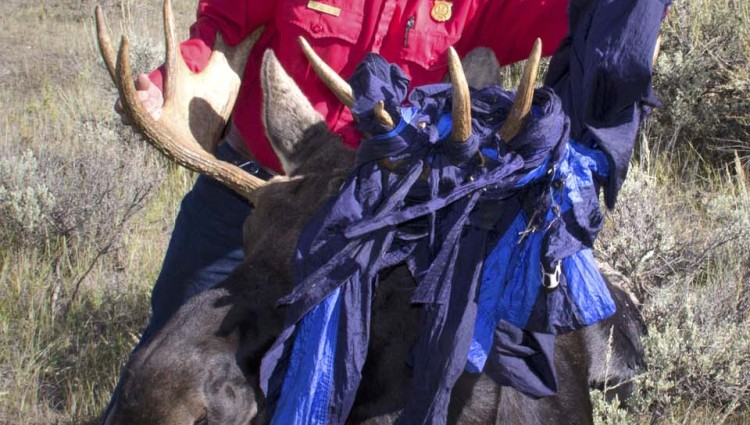 Removing hammock from moose