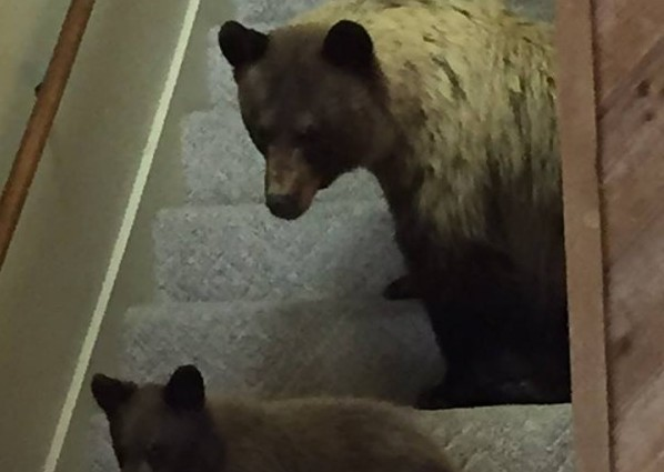 Bear In Home
