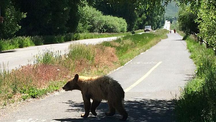 Bear Cub In Melody